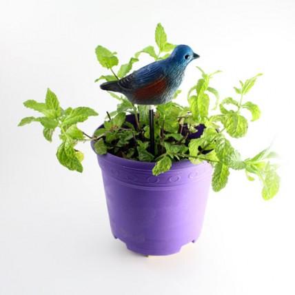 Pájaro Chivato Azul